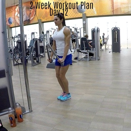 2 Week Workout Plan Day 12: Chest Triceps Abs