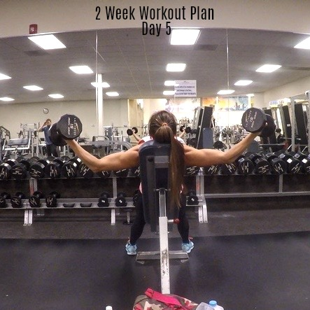 2 week workout plan day 5 shoulders chest abs  fitness